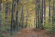 Den Wald vor lauter Wahlen nicht mehr